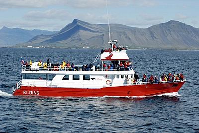 Walbeobachtungsboot Elding